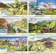 1672 Plantes Peu Connues - Weinig Bekende Planten - Liebig Serie  –  Read Description & Get Discount Up To 50% - Liebig