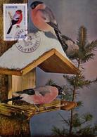 Carte Maximum CM Andorre - Oiseau Bouvreuil - Bullfinch Bird Maxi Card -  Dompfaff Maxikarte - Maximum Cards
