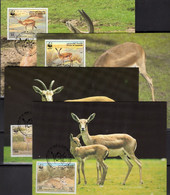 Naturschutz WWF-Set 66 Bahamas 672/5 FDC 40€ Kuba-Pfeifgans 1988 Dokumentation Gänse Fauna Duck Cover Of Caribic America - Protection De L'environnement & Climat