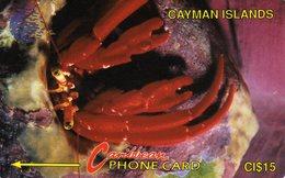 *CAYMAN ISLANDS: 4CCIB* - Scheda Usata - Isole Caiman