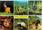 Wild Im Pfälzerwald - Renard - Cerf - Sanglier.... - Animals