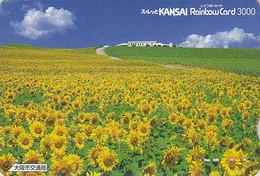 Carte Japon - Fleur TOURNESOL Champ - SUNFLOWER Japan Flower Card - Blume Karte - 220 - Fleurs