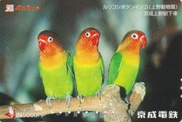 Carte Prépayée Japon - Oiseau Oiseaux - PERROQUET - PARROT Japan Bird Birds Card - PAPAGEI - PAPAGAIO - 57 - Papageien