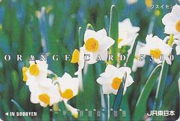 Carte Orange Japon - FLEUR Fleurs - NARCISSE - FLOWER  Japan JR Card - Blume Karte  - 590 - Fleurs