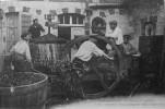 Scènes Normandes : La Fabrication Du Cidre - France