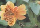 Moldova  Moldavie  Moldavia  Moldau , 1996 , Butterfly  Flowers ; Pre-paid Postcard - Moldova