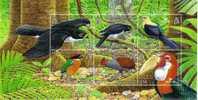 Solomon Islands / Birds / Hawk - Vögel
