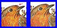 BUZIN : Rouge-gorge - Variété : Petite Plume Rouge - T.50 Des Planches B-F - 1985-.. Vogels (Buzin)