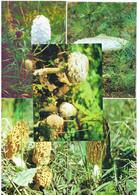 Belarus 1999 Flora Mushroom Mushrooms Plants Circulation 3000 - Champignons