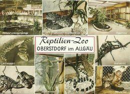 AK Oberstdorf Reptilien-Zoo Mehbild Schlangen U.a. Farbfoto 1971 #1287 - Autres
