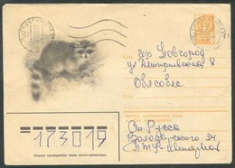 14885 RUSSIA 1981 ENTIER COVER Used ANIMAL ANIMALS Raccoon Procyon Lotor RATON WASCHBÄR FAUNA ANIMAUX USSR Mailed 145 - 1980-91