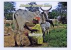 BURKINA-FASO-african Woman And Cow In Fulani Village - Burkina Faso