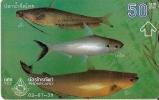 TARJETA DE TAILANDIA DE UNOS PECES (PEZ-FISH) - Peces