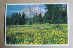 Carte Postale : Grand Teton National Park, Wyoming, U.S.A. - Etats-Unis