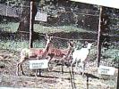 MATTIE PAESE TORINO  DAINI DELLA VALLE ORSIERA V1977  DF6495 - Italia