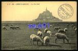 Le Mont-saint-Michel  -  Les Prés Salés  - Animée -   Moutons  - Réf : 16450 - Le Mont Saint Michel