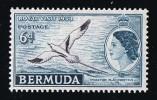 BERMUDA  1953  Queen Elizabeth Definitives  6 D.  Bird  SG 143  ** MNH - Bermuda