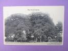 CPA/93/ BOIS SAINT MARTIN (arbres, Cabane, Voiture Ancienne) Cornillard, Nouveautés, Editeur - Francia