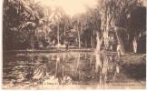 Ile MAURICE : Etang Du Jardin Des Pamplemousses - Mauritius