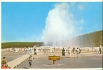 USA – United States – Old Faithful Geyser, Yellowstone National Park, Unused Postcard [P4462] - Yellowstone