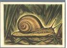 Estonian Animals - Vineyard Snail - USSR 1962 - Animals
