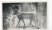 Egypte. Thèbes. Deir El-Bahari. Temple De La Reine Hatchepsut. Gaddis Luxor - Egypt