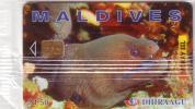 MALDIVES  MORAY EEL MURENE RF50 VERSO VISIT MALDIVES YEAR 1997  MINT IN BLISTER NSB SUPERBE - Maldives