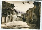 - LA ROQUEBRUSSANNE - ( Var ) - Avenue Du Portail - Non écrite, Neuve, Cliché Peu Courant, Splendide, TTBE, Voir Scans. - La Roquebrussanne