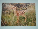 17975 POSTCARD: ANIMALS: A Young Red Deer. - Unclassified