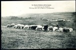"""CPA. La Haute-Saône Pittoresque. Les Environs De Vesoul. Pâturage Près De La Font De Champdamoy.  """"Moutons"""". - Allevamenti"""