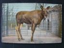 CPA Animaux à Identifier  L810 - Tierwelt & Fauna