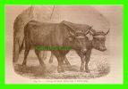 AGRICULTURE - ATTELAGES DE BOEUFS TIRANT SOUS LE MÊME JONG - PRODUCTION AGRI-RETRO - - Attelages