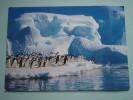 18123 POSTCARD: ANIMAS: Adelie Penguins In ANTARTICA- ANTARTIC CONTINENT. - Animals