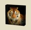 Canvas Art Print On Stretcher Bars, Animal, Tiger, Tigre, Tier - Prints & Engravings