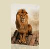 Canvas Art Print On Stretcher Bars, Animal, Tier, Lion, Leone - Prints & Engravings