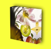 Canvas Art Print On Stretcher Bars, Still Life, Fruits, Kiwi, Ananas, Flower - Prints & Engravings