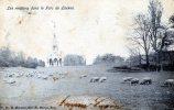 17989     Belgio,     Bruxelles,  Les  Moutons  Dans  Le  Parc  De  Laeken,  VG  1907 - Foreste, Parchi, Giardini