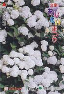 Carte Prépayée Japon - FLEUR Fleurs - HORTENSIA - FLOWER  Japan T Card - Blume Karte  - 847 - Fleurs