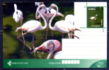 CUBA 2011 / Postal Stationery BIRDS Entero Postal AVES / C3513 - Pájaros