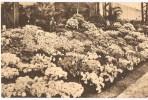 Gentse Floralien 1938 - Gent