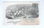800/17 -  BELGIQUE COQS Et POULES - Carte Illustrée 1904 Couveuses Artificielles Van Eyck-Dubois à ST NICOLAS WAES - Farm