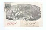 801/17 -  BELGIQUE COQS Et POULES - Carte Illustrée 1904 Couveuses Artificielles Van Eyck-Dubois à ST NICOLAS WAES - Farm