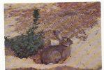 Lapin Dans Les Dunes. Réserve Ornithologique Du Zwin - Animals