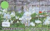 Télécarte Japon FLEUR ORCHID (1991) Orchidée Orquídea Orchidee Orquidée Orchid * Flower Phonecard * - Fleurs