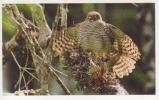 Crécerelle Malgache,oiseau,Afrique,M Adagascar,vignette  Jungle Mania N°124 - Adesivi