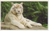 Tigre Blanc,félin,Asie,Bornéo Sumatra Sulawesi,vignette Jungle Mania N°139 - Adesivi