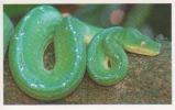 Python Vert,serpent,Asie,La Nouvelle Guinée,vignette Jungle Mania N°183 - Adesivi