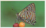 Lycénidé,papillon,Asie,La     Nouvelle Guinée,vignette Jungle Mania N°194 - Adesivi