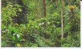 Reboisement 5,forêt Tropicale,vignette Jungle Mania N°199 - Altri