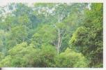 Reboisement 2,forêt Tropicale,vignette Jungle Mania N°196 - Adesivi